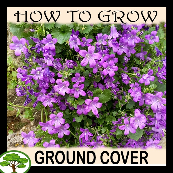 Ground cover plants - all need to know