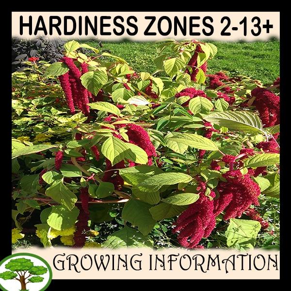 Hardiness zones 2-13+