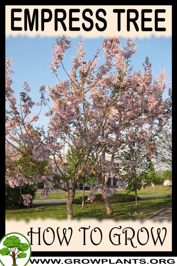 How to grow Empress tree
