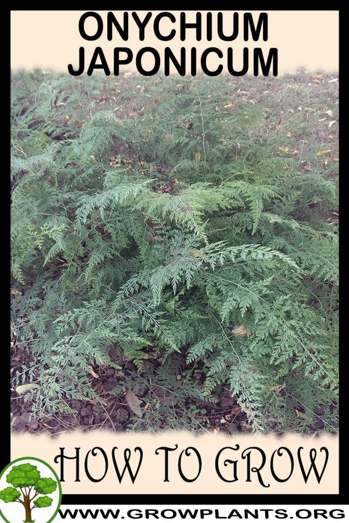 How to grow Onychium japonicum