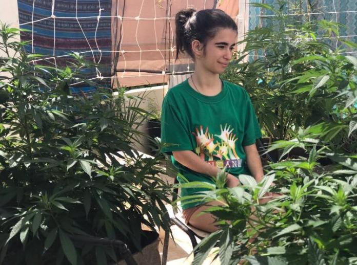Habeas Corpus para cultivo de Cannabis Medicinal
