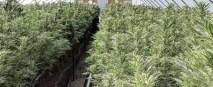 Pueblo Colorado grow