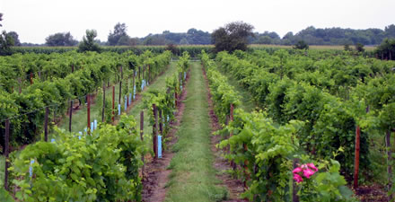 Wisconsin's grape industry continues to gain momentum