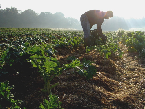 How to Create an Environment-Friendly Biodynamic Food System