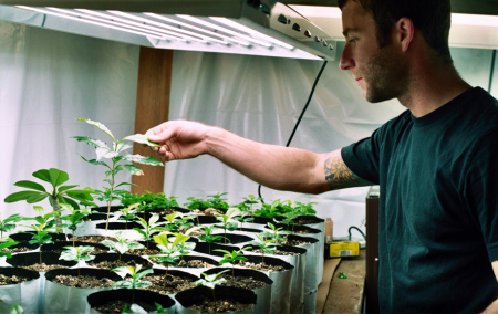Best Grow Lights for Starting Seeds Indoors