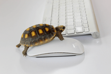 10 Silent killers that affect your website speed