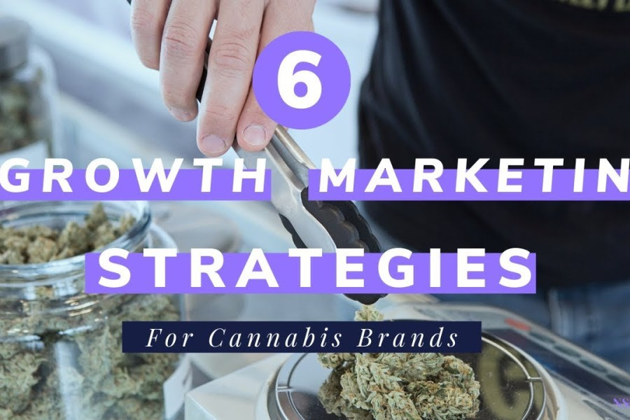 Top 6 Best Growth Marketing Strategies For Cannabis Brands Who Can't Use Paid Media