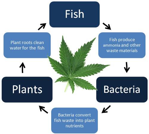 Hardy Aquarium Plants