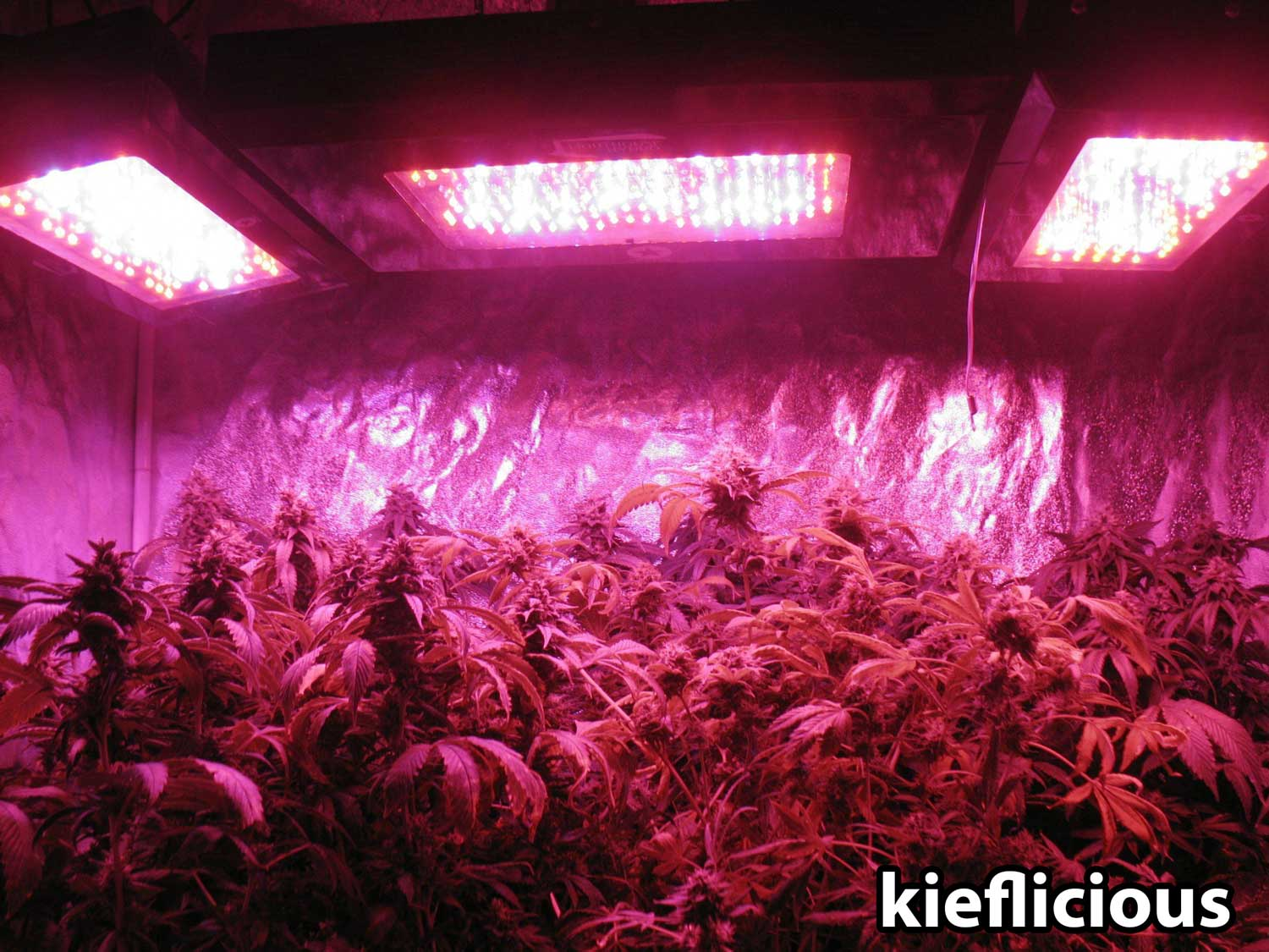 ... Grow Lights For Growing Marijuana Indoors Pot Farmers Mart Best LED  Grow Lights Cannabis Grow Q A What S The Best Grow Light For Big Yields High  Times ...