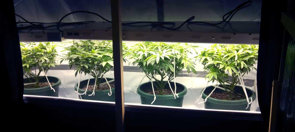 T5 Grow Lights