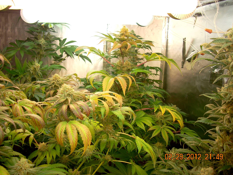 Led Flowering Grow Lights