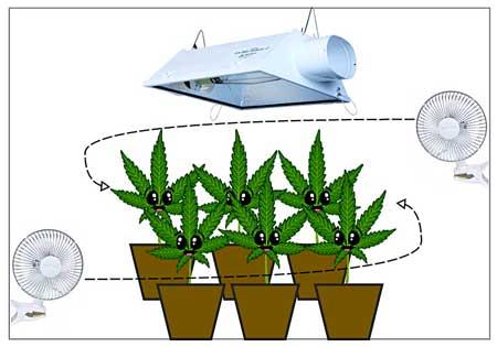 Growing cannabis circulation diagram