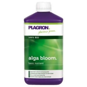 Alga Bloom 1