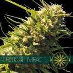 Critical Impact Fem Vision Seeds