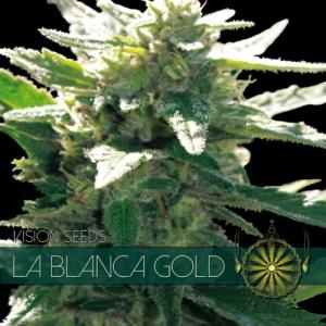 La Blanca Gold Fem Vision Seeds