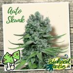 Auto Skunk Auto Biological Seeds