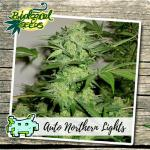 Auto Northern Light Biological Seeds