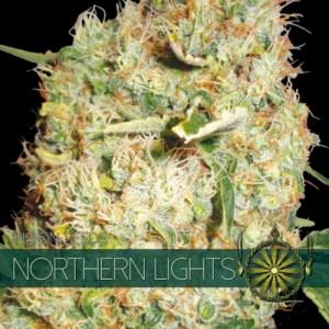 NORTHERN LIGHTS Fem