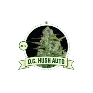 O.G. Kush Auto City