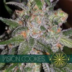 Vision Cookies Fem Vision Seeds