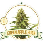 Green Apple Kush Fem City Seeds Bank