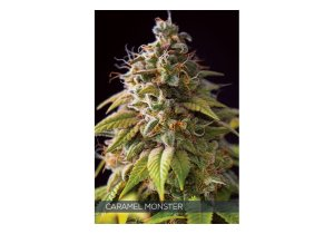 Caramel Monster Fem Vision Seeds