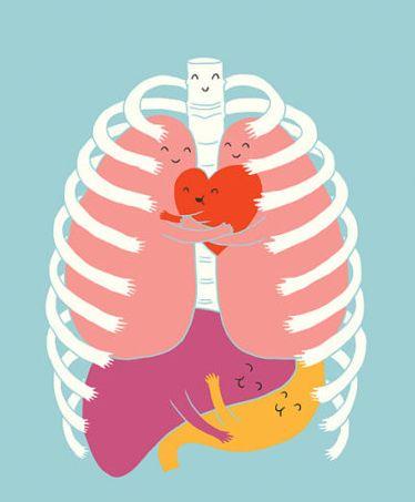 Image result for smile organs
