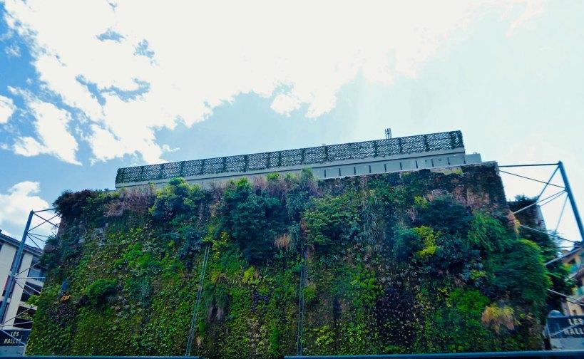 Fassadenbegrünung in Städten