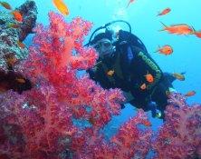 Weltmeere schützen – mit Korallen aus Aquakultur