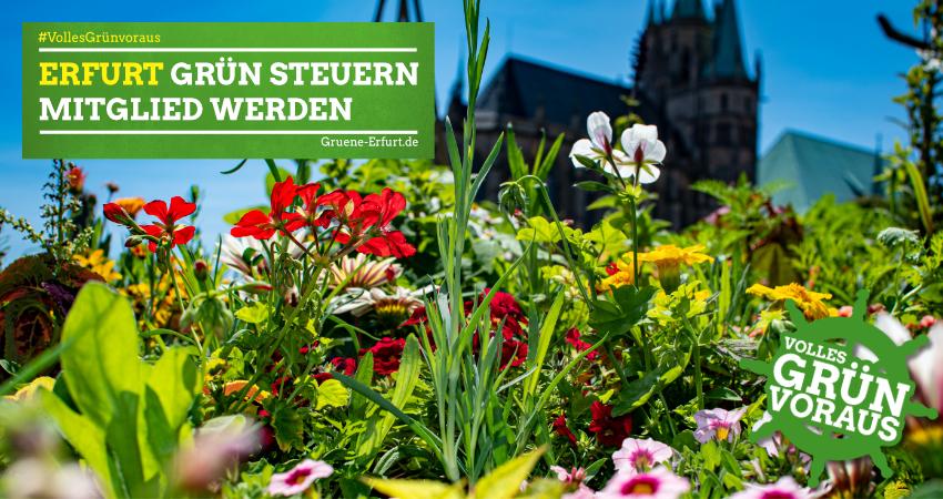 Erfurt Grün steuern  Mitglied werden