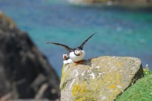 Vogelarten Irland