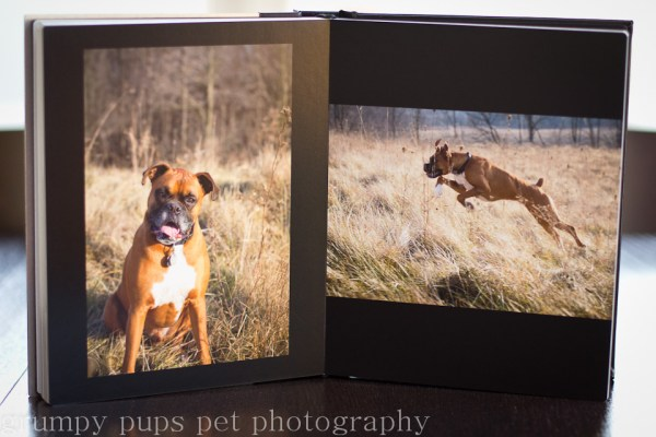 inside page view of a custom pet photo album by grumpy pups pet photography, grand rapids animal photographer