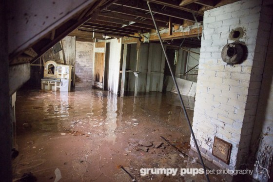 flooded basement in Detroit, grumpy pups pet photography