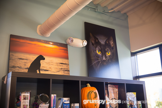 dog and cat photography by grumpy pups pet photography, hanging on a wall at eastown veterinary clinic