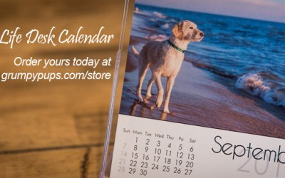 2014 Dog's Life Desk Calendar | a perfect gift for dog lovers