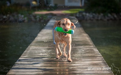 Dock Diving Dogs (And a Cat!) | kalamazoo pet photographer