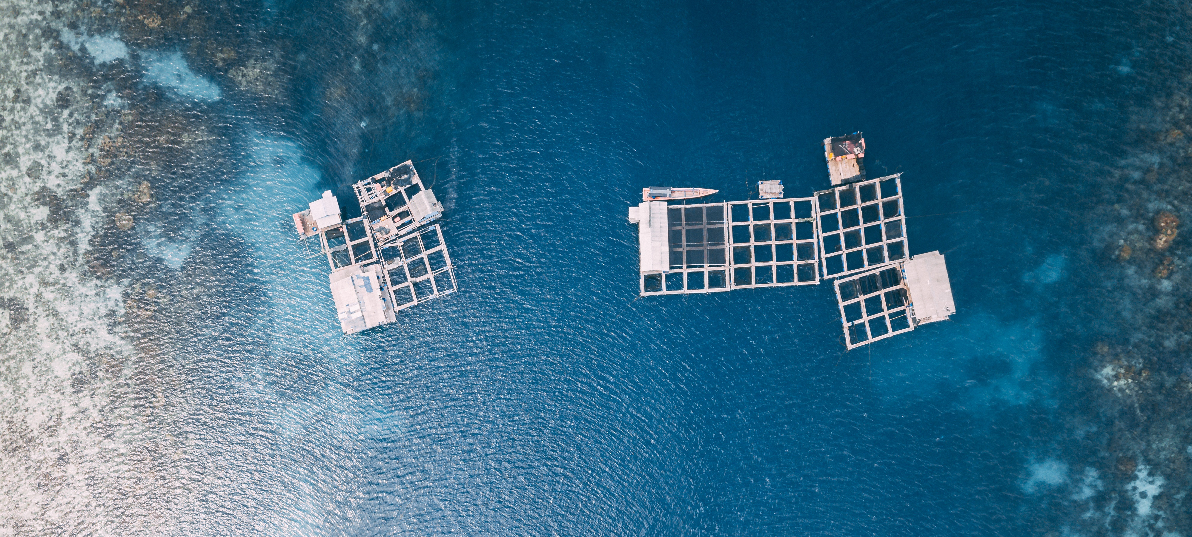 Aquaculture in Spain is a sector on the rise, gaining more weight in our economy each year and emerging as one of the industries achieving sustainable.