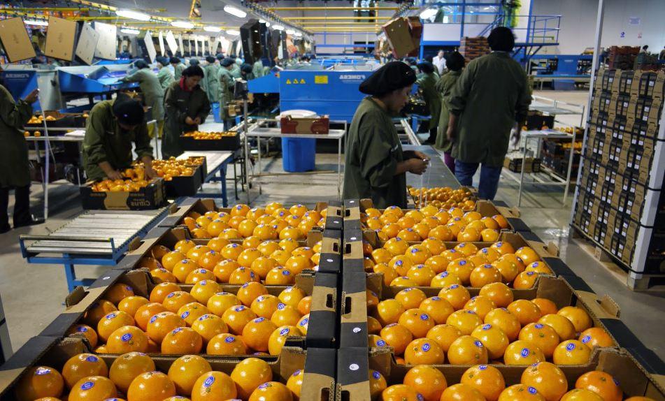 La gestión de los recursos humanos en el sector agrícola y ganadero