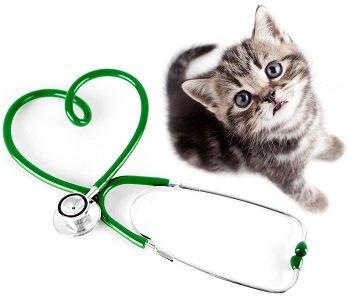 nuova veterinaria