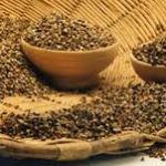 Proprietà nutrizionali dei cereali antichi e integrali