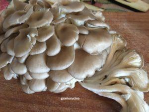 funghi orecchietta PLEUROTUS OSTREATUS