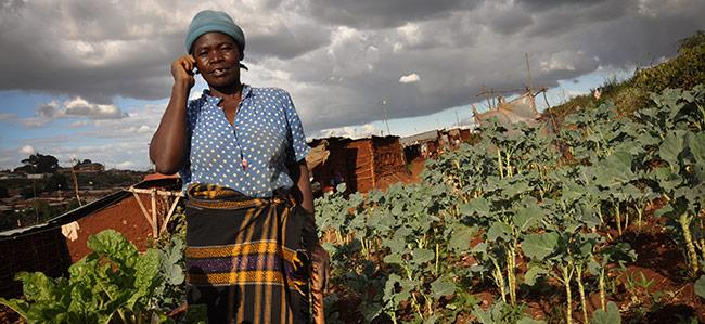 mFarm Kenya