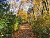 Lazienki Royal Park_wynik