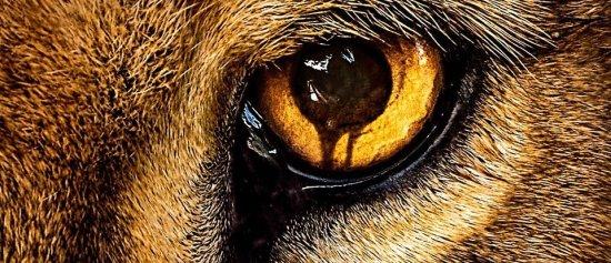 Zoo Tv Series Download Season 3 Episode 3 HDTV Micromkv