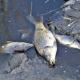 moria-di-pesci