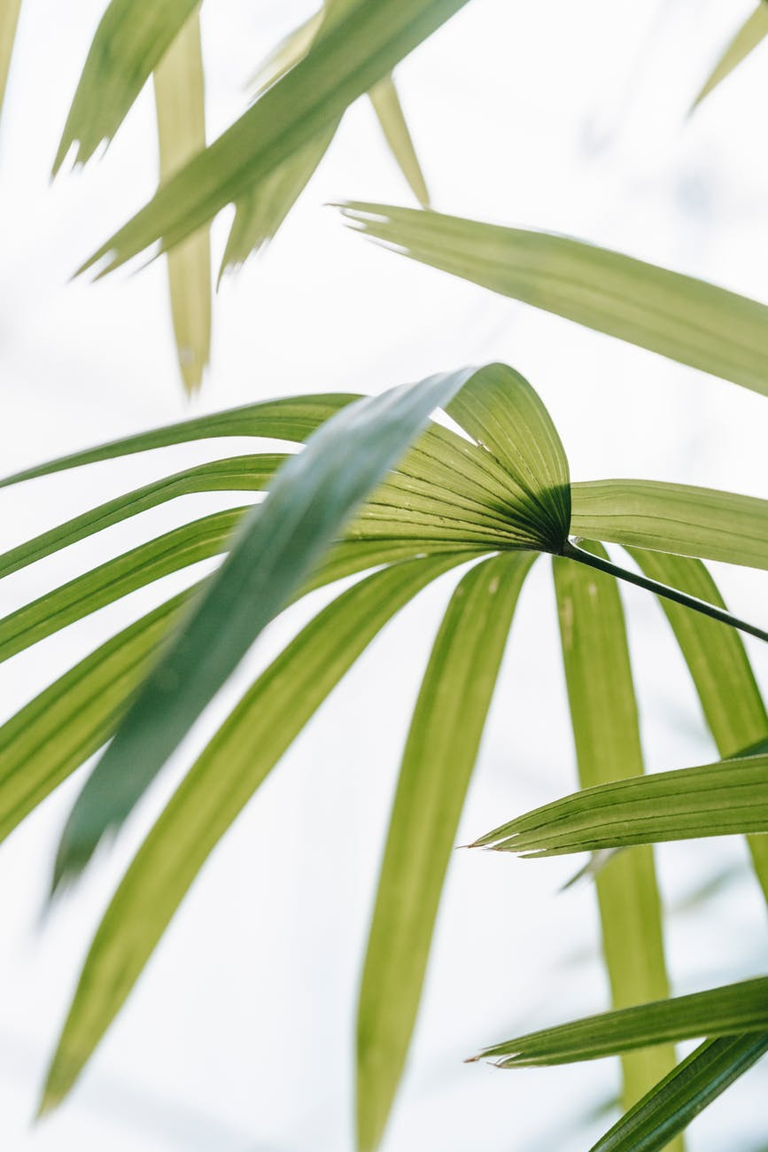 fresh green leaves of exotic plant in sunlight