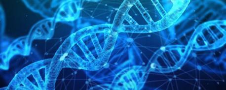 Hur använder man DNA i modern släktforskning? | Centrum för kritiska  kulturarvsstudier, Göteborgs universitet