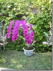 National Flower Series–East Asia 3–North Korea (Magnolia Siboldii)