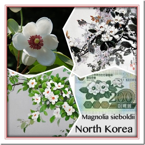 National Flower Series–East Asia 3–North Korea (Magnolia Siboldii)