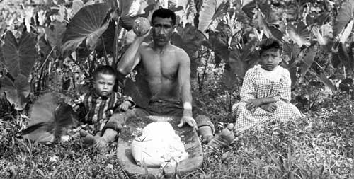 A Hawaiian man pounding taro to make poi, 1890s. Photo from Bonhams courtesy of Wikimedia Commons.